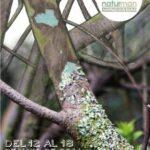 II Festival Internacional de Cine de la Naturaleza y el Hombre de La Laguna (Naturman), 12-18 de mayo