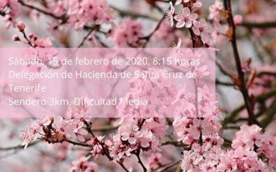 LXXXIX Itinerario Cultural «Entre Almendros…» Sábado 15 febrero 2020, 08:15 horas; Delegación Hacienda Santa Cruz de Tenerife.
